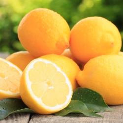 Organic Deodorant Cream - Lemon 4oz.