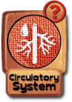 -button-circulatorysystem-v3.png