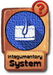 -button-integumentarysystem-v3.png
