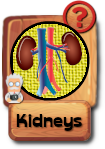 -button-kidneys-v3.png