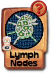 -button-lymphnodes-v3.png