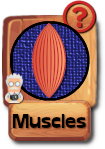 -button-muscles2-v3.png