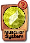 -button-muscularsystem-v3.png