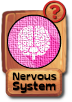 -button-nervoussystem-v3.png