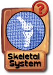 -button-skeletalsystem-v3.png