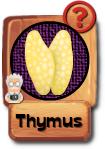 -button-thymus-v3.png