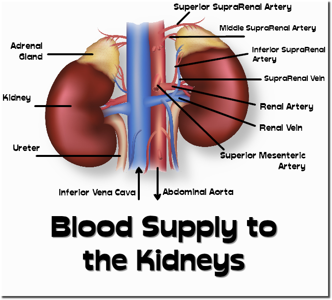 -kidneys001.png