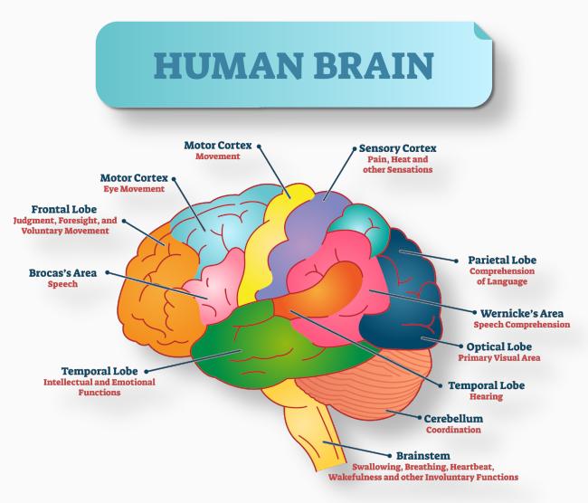 brain002.jpg