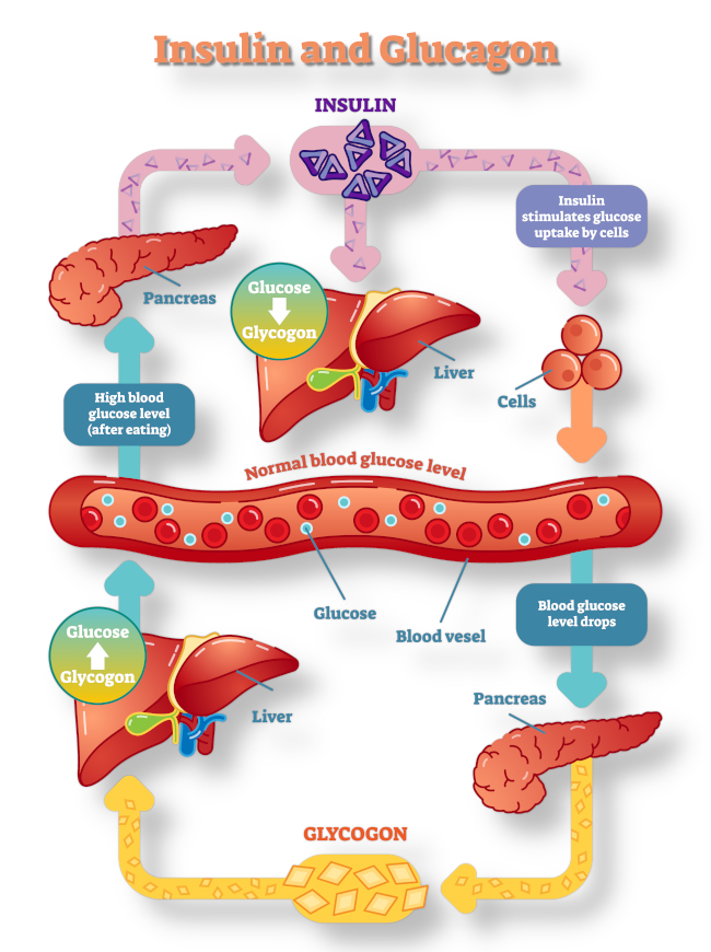 digestivesystem-topbanner.jpg