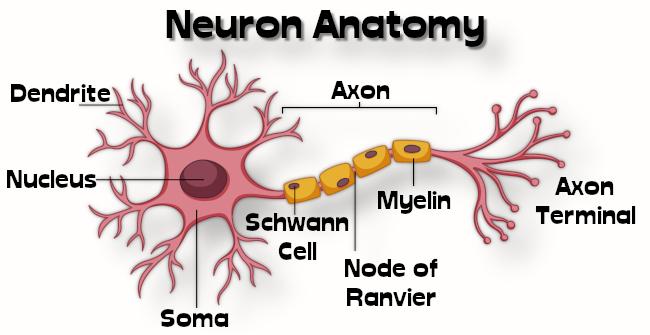 neurons001.jpg
