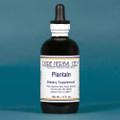 Pure Herbs: Plantain