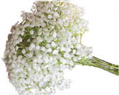 Baby's Breath 10 Stems Bunch - White