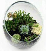 Open Half Moon Terrarium With Succulents