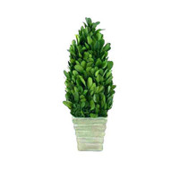 Preserved Boxwood Topiary Cone