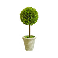 Preserved Boxwood Topiary - Large