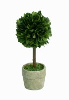 Preserved Boxwood Topiary - Mini