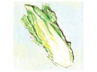 Parris Island Romaine Lettuce