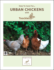 How to Care for Urban Chicken with Toockies