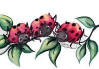 3 ladybugs