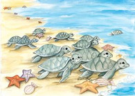 baby sea turtles going in to the ocean