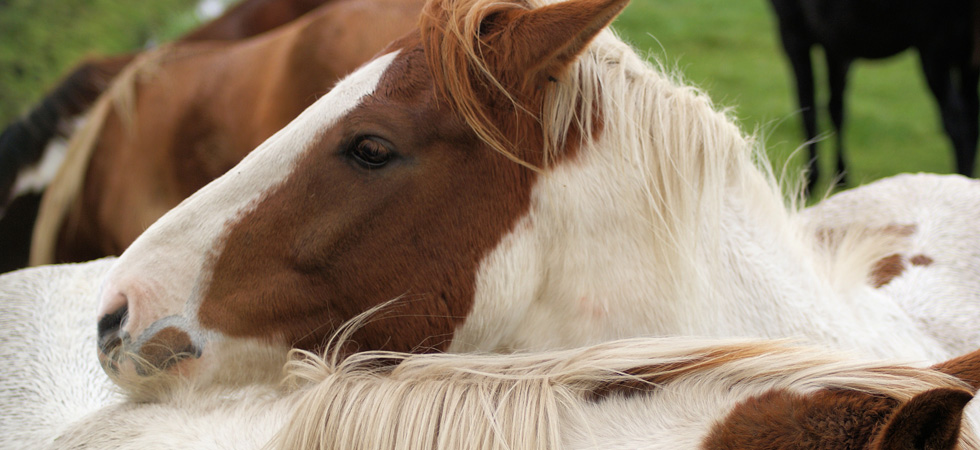 Amish Country horse supplements
