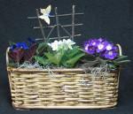 African Violet Planter Basket