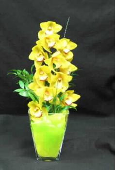 "A truly unique arrangement, sure to stand out in a crowd. A lovely stem of *Light Green*, or Yellow Cymbidium orchids, arranged in our heavy glass ""Louvre"" vase. We wrap the stem in a water proof cloth like material, that adds interest and functionality. A long lasting gift, and keepsake vase.Let Hatcher florist deliver for you"