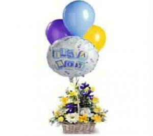 A terrific gift for a new baby boy. A basket full of flowers is finished with 1 mylar and 3 multi-coloured latex balloons in an impressive display. The arrangement includes purple Iris, white Lisianthus, yellow Alstroemeria, and more. Balloon design will vary.