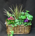 A lasting gift, of tropical plants, and flowering plants. We use fresh plants daily.