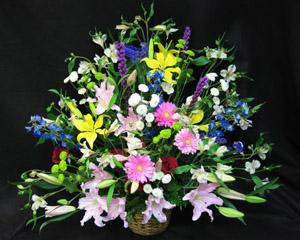 A large basket style sympathy arrangement. Lovely fresh Acapulco lilies, Roses, Gerbera, Alstroemeria, Mums, and filler flowers. We deliver flowers from our flower shop.