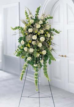 This standing spray is graced with two dozen green carnations. White waxflower, Bells of Ireland, and baby breath add to its tonal beauty. Delivered by Hatcher Florist for the funeral home or service