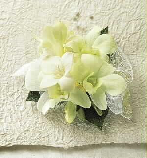 White dendrobium orchids. Simply elegant.