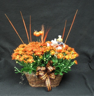 Fall double Chrysanthemum basket