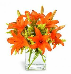 Glowing orange Asiatic lilies are interspersed with bright yellow solidago, lending a warm, cozy air to any room. Great to send a cheery greeting for any occasion!