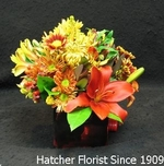 A seasonal mixture of locally grown flowers in a Hatcher Original Design. This arrangement comes in a square vase with asiatic lillies, mums, hypericum berries, alstromeria, and daisies.