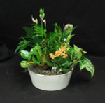 This tropical planter contains flowering mini spathiphyllum, assorted tropical plants, and flowering kalanchoe. We use the freshest plants we have at the time of delivery. Ceramic base may change shape but will always be designed or planted in a ceramic container.  Toronto, North York, Vaughan, Mississauga, Richmond Hill and all of the Golden Horse Shoe. We also send flowers out of town.