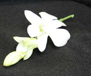 White Dendrobium orchid boutonniere. So people say button hole.Add bow of your choice, to make a simple corsage please specify.