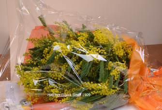 This is a double bouquet of Mimosa, very full and fragrant. We are your Toronto Florist selling great flowers from our shop on Yonge Street.