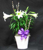 Easter lily two plants in a white basket with pussy willows for accent.