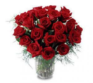 Two Dozen Red Freedom Roses 24 Stems Roses Toronto Flower Delivery