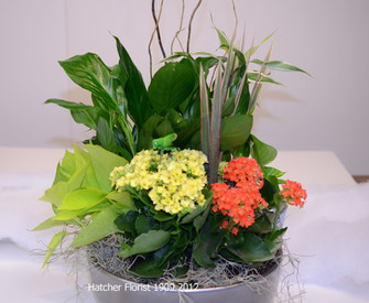 A sample of the tropical planters we make a Hatcher Florist. We use the freshest tropical and flowering plants in stock. The mix is always changing.A small replica grasshopper is placed in the planter for fun. Curly willow adds a vertical line to the planter.