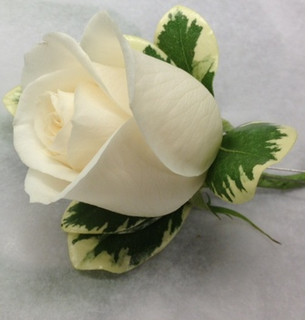 Vendela rose with Pittosporum foliage. We can make one in red, yellow, mauve, earth tone and or pink. Please order 5-7 days advance. Boutonnieres are worn on the left lapel. Drop by our Toronto/North York store or order on line or the phone.