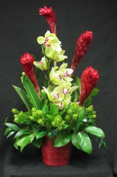 This is a contemporary twist to a floral arrangement. Ginger and a Cymbidium orchid add a tropical feel to this beautiful arrangement. Accented with leucadendron foliage. Delivering fresh flowers from the tropics to you daily.