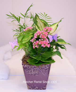 Tropical and flowering plants designed in a ceramic container. Our containers are constantly changing in style and colours. We match the flower plants colour to the container so you get a great colour match. Made daily in our Toronto - North York and area flower shop.