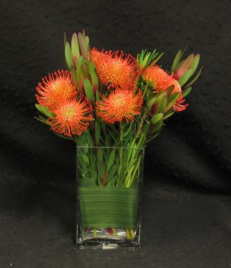 Leucospermum In A Rectangular Vase Toronto Flower Delivery