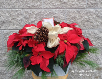 Our seasonal favourite double Poinsettia basket decorated with White Pine and pine cones. Adding a festive bow completes this Christmas gift. A Toronto special created in our Toronto and North York flower shop. Call today for best selection.