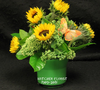 Lovely Ontario sunflowers are assorted filler are designed in a green glass vase, cube or cylinder. Ontario sunflowers are now coming into season. Please order soon. We make them fresh to order in our Toronto/North York flower shop.