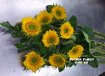Fresh Ontario locally grown Sunflowers. We buy these from growers in the Beamsville and Niagara area of Ontario. Perk up somebodies day with a happy Sunflower bouquet. Limited time, so buy soon and often!