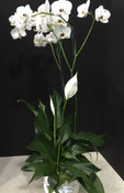 A special Comfort planter with a custom design, each week the plants will vary but we will use white plants.