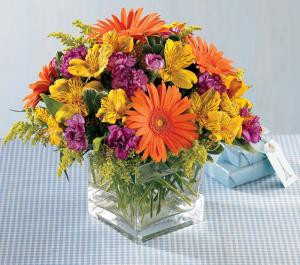 Send greetings for a very Happy Birthday with our gaily colored bouquet. Bright orange Gerbera daisies and purple mini carnations are only slightly subdued by golden alstroemeria and solidago. Arranged in a clear glass cube, each flower delivers a warm and wonderful birthday wish. Let us deliver one today for you.